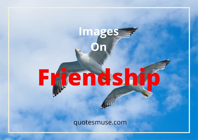 Images on Friendship – Quotes, Pictures and Photos for Friends