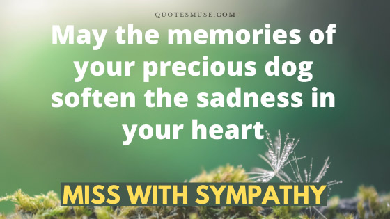 Sorry for your loss dog quotes
