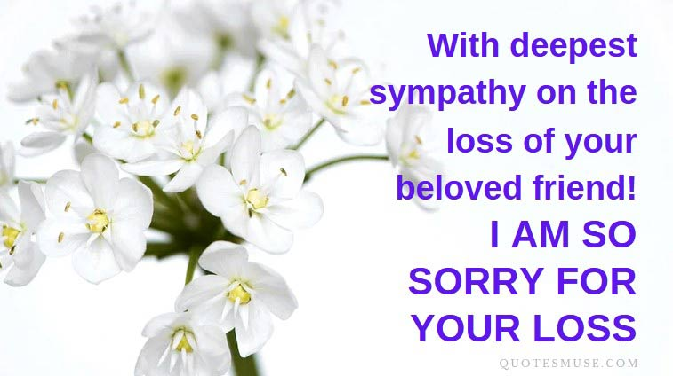40 Sympathy Messages for Loss of Pet – Quotes | Wishes | SMS